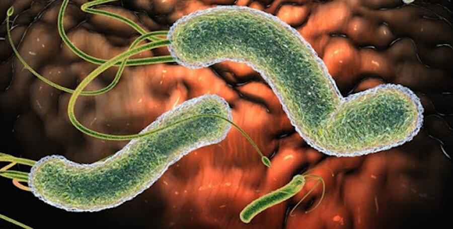 Що таке парвовірусний ентерит