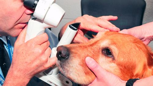 Офтальмологія